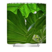 4327 - Leaves Shower Curtain