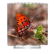 4534 - Butterfly Shower Curtain