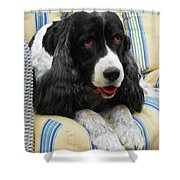 #940 D1031 Farmer Browns Springer Spaniel Shower Curtain