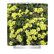 A Cluster Of Sunshine Shower Curtain