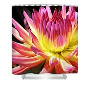 A Burst Of Color Shower Curtain