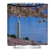 A Capital Cherry Blossom I Shower Curtain