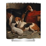 A Couple Of Foxhounds With A Terrier - The Property Of Lord Henry Bentinck  Shower Curtain