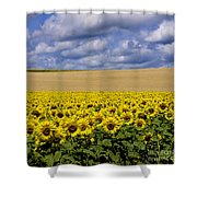 A Field Of Sunflowers . Auvergne. France Shower Curtain