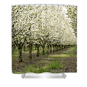 A Flowering Cherry Orchard Shower Curtain