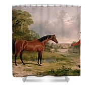 A Horse And A Soldier Shower Curtain