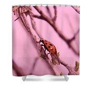 A Ladybug   Shower Curtain