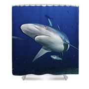 A Large Silvertip Shark, Fiji Shower Curtain by Terry Moore
