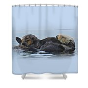 A Mama Sea Otter And Her Babe Shower Curtain