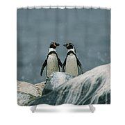 A Pair Of Humboldt, Or Peruvian Shower Curtain