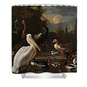 A Pelican And Other Birds Near A Pool, Known As The Floating Feather, Melchior D Hondecoeter, Shower Curtain
