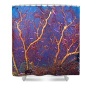 A Red Sea Fan With Purple Anthias Fish Shower Curtain