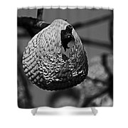 A Shell At The Shore Shower Curtain