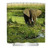 African Elephant In Swamp Shower Curtain