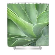 Agave Attenuata Abstract Shower Curtain