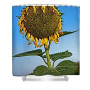 Aged Beauty Shower Curtain
