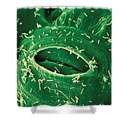 Agrobacterium Tumefaciens Shower Curtain