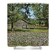 Alabama Cotton Field Shower Curtain
