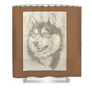 Alaskan Malamute And Pup Shower Curtain