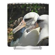 Albatross Lovers Shower Curtain