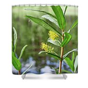 All Traps Set. Creeping Willow Shower Curtain