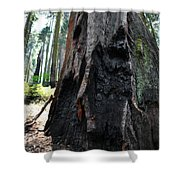 Alta Vista Giant Sequoia Shower Curtain