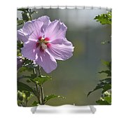 Althea Rose Of Sharon Hibiscus Bloom Shower Curtain