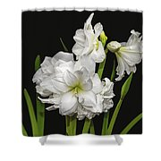 White Amaryllis Shower Curtain