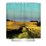Amber Waves Of Grain Shower Curtain