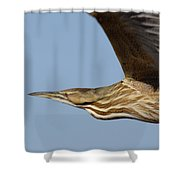 American Bittern Flies By Shower Curtain