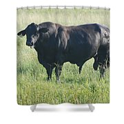 American Cow Shower Curtain