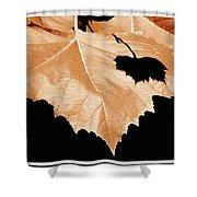 American Sycamore Leaf And Leaf Shadow Shower Curtain