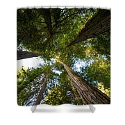 Amoung Giants  Shower Curtain