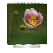 Anemone Japonica  Shower Curtain