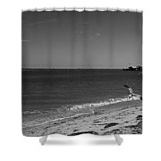 Anna Maria Shoreline Shower Curtain