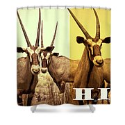Antelopes Shower Curtain