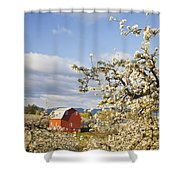 Apple Blossom Trees And A Red Barn In Shower Curtain