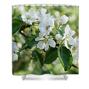 Apple Flowers Shower Curtain
