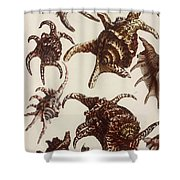 Aquatic Animals - Conch - Shells - Snails Shower Curtain