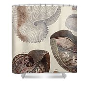 Aquatic Animals - Sea - Shells - Composition - Alien - Wall Art  - Interior Decoration  Shower Curtain