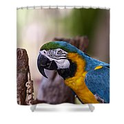 Ara Parrot Shower Curtain
