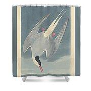 Arctic Tern Shower Curtain
