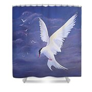 Arctic Tern Shower Curtain