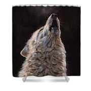 Arctic Wolf Shower Curtain