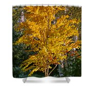 Artistic Fall Colours Shower Curtain