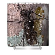 Asian Long-horned Beetle Shower Curtain