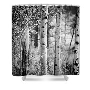 Aspen Trees In Black And White Shower Curtain