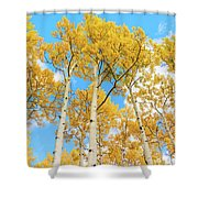 Aspens Above Shower Curtain