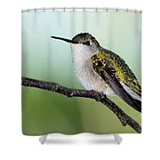 At Rest Shower Curtain
