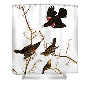 Audubon: Blackbird, (1827) Shower Curtain